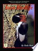 Iowa Birdlife