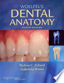 Woelfel s Dental Anatomy