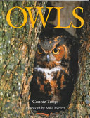 The Enchanting Owl