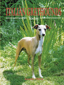 Italian Greyhounds Today