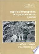 Etapes Du Developpement de la Plante Du Haricot Commun