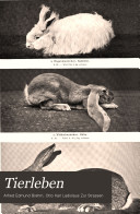 Tierleben
