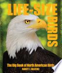 Life Size Birds