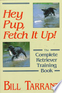 Hey Pup  Fetch It Up