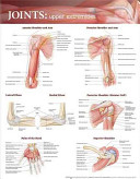 Joints of the Upper Extremities