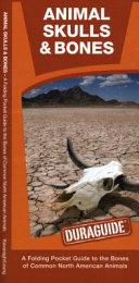 Animal Skulls   Bones