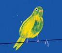 Yellow Bird with Worm Book PDF