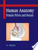 Human Anatomy  Female Pelvis And Breast