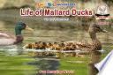 Life of Mallard Ducks Life Cycle Of Mallard Ducks