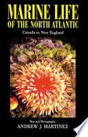 Marine Life of the North Atlantic