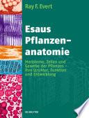 Esaus Pflanzenanatomie Grund Und Forschungswissen Im Bereich Der