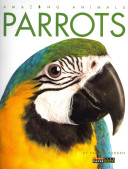 Amazing Animals  Parrots