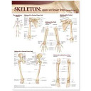 Lippincott Williams   Wilkins Atlas of Anatomy Skeletal System Chart Set