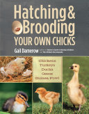 Hatching & Brooding Your Own Chicks