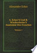 A  Ecker S Und R  Wiedersheim S Anatomie Des Frosches