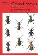 Common ground beetles
