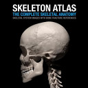 Skeleton Atlas