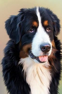 Handsome Bernese Mountain Dog  for the Love of Dogs