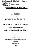 A Fable of the Spider and the Bees