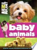 Baby Animals  Animal Planet Animal Bites
