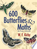 600 Butterflies and Moths in Full Color Exquisite Hues And Shapes Of Butterflies And Moths