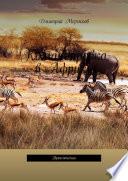 Командировка в Африку. Приключения