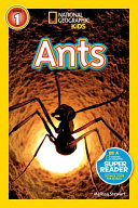 ANTS LELEL 1  NATIONAL GEOGRAPHIC KIDS