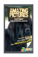 Amazing Pictures And Facts About Newfoundlands