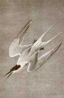 The Audubon notebook