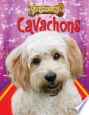 Cavachons