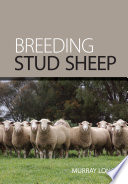 Breeding Stud Sheep
