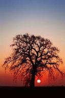 Winter Oak Tree Journal Book PDF