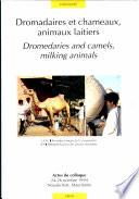 Dromadaires et chameaux, animaux laitiers