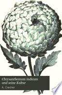 Chrysanthemum indicum und seine Kultur