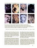 Lions And Tigers And Leopards book