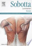 Lernkarten Muskeln