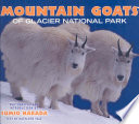 Mountain Goats of Glacier National Park
