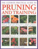 The Ultimate Practical Guide to Pruning and Training