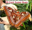 99 Cent Super Bugs
