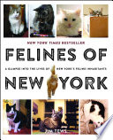 Felines Of New York : america's most glamorous city, felines...