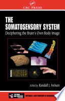 The Somatosensory System