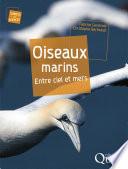 illustration Oiseaux marins