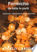 Formiche da tutte le parti   Suggerimenti per l   allevamento di formiche  ECO