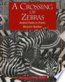 A Crossing of Zebras