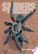 Spiders of Southern Africa Mysterious And Always Fascinating World Of Spiders