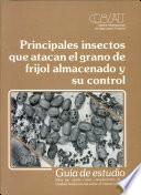 Principales insetctos que atacan el grano de frijol alma cendo y su control