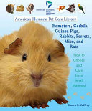 Hamsters  Gerbils  Guinea Pigs  Rabbits  Ferrets  Mice  and Rats PDF