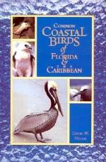 Common Coastal Birds of Florida and the Caribbean