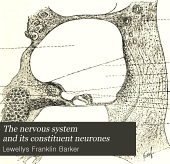 The Nervous system and its constituent neurones