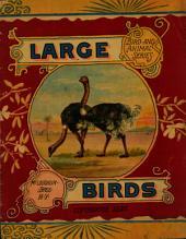 Large Birds